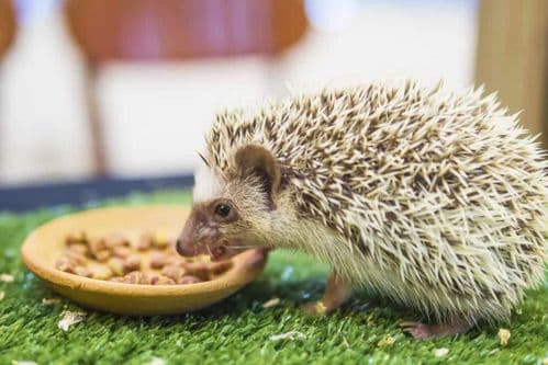 Hedgehogs / Land Wildlife Products