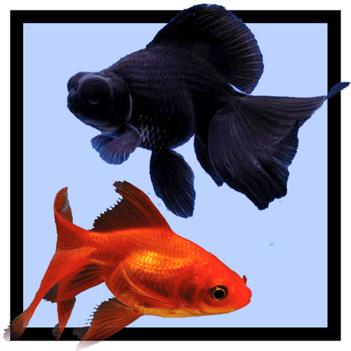 Live Coldwater & Pond Fish