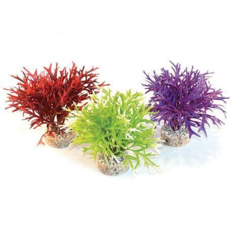 Sydeco Water Fern