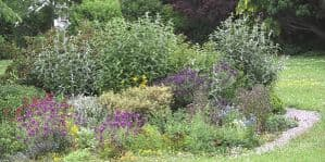 Large garden border for Butterflies