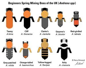 Spring Mining Bee ID chart