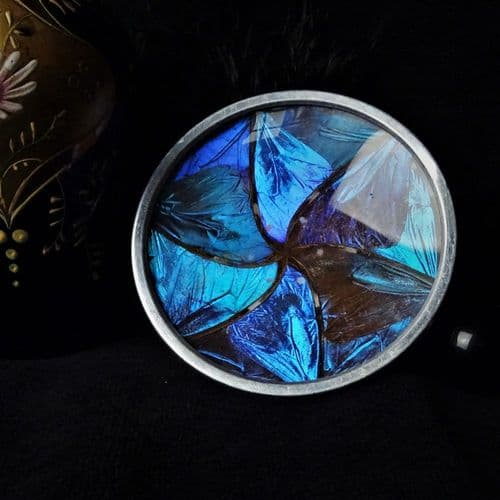 'The Enchanted Vortex' Butterfly Wing Plate