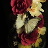 Butterfly and Real Flower Dome