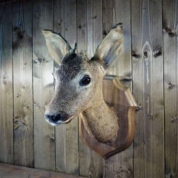 Small French Taxidermy Roe Deer Head on Mount