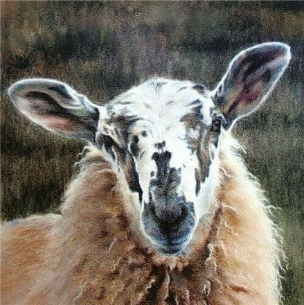 White Faced Sheep  - Fine Art Blank Greeting  Card