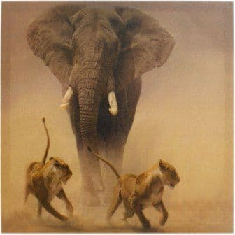 Elephant and Lioness Canvas Picture
