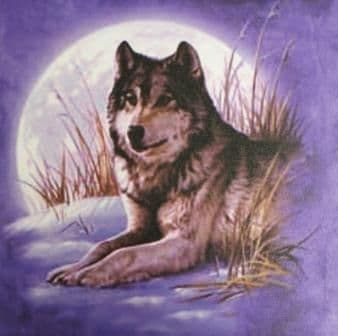 Moonlight Wolf Picture