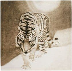 Snow Tiger Picture