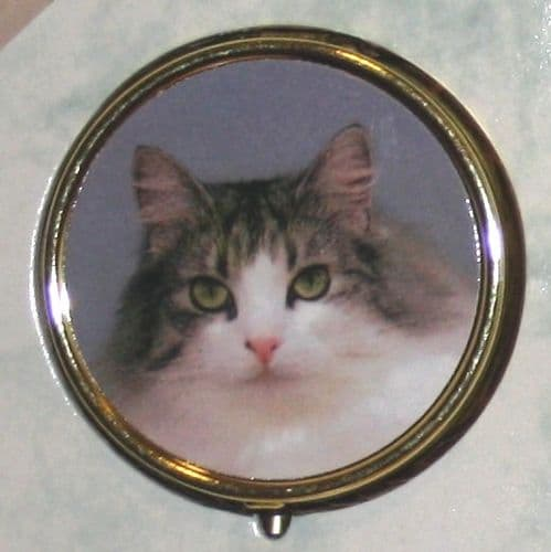 Tabby and White Cat Pill Box