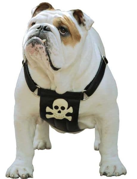Pirate Calf Leather Dog Harness