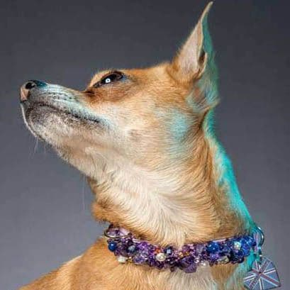 The Amethyst Pearl.  Amethyst dog collar - Holly & Lil Collars Handmade in Britain, Leather dog collars, leads & Dog harnesses.