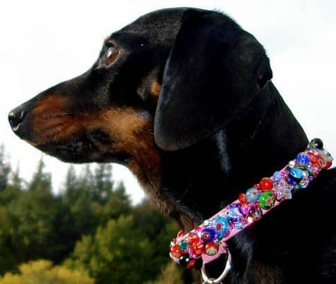 The Secret Garden.  Millefiori Beaded dog collar - Holly & Lil Collars Handmade in Britain, Leather dog collars, leads & Dog harnesses.