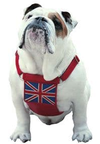 UK Flag Leather dog Harness - Holly & Lil Collars Handmade in Britain, Leather dog collars, leads & Dog harnesses.