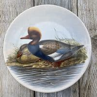 Poole Pottery Transfer Plate by John Gould - Red-Crested Duck