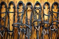 Bridles & Leatherwork