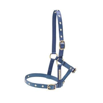 Cottage Craft Nylon Foal Headcollar