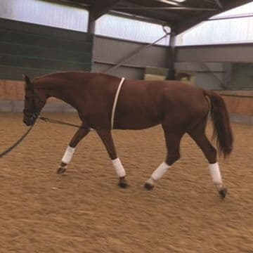 Mark Todd Lunging Training Aid